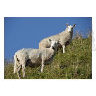Schwester-Schafe Notecard Karte