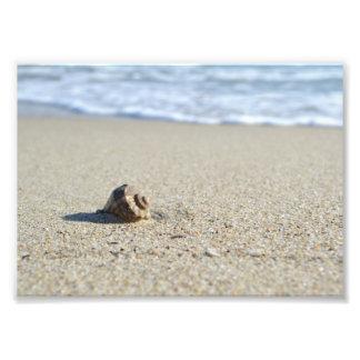 Seashell Fotodruck