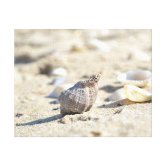 Seashell Leinwanddruck