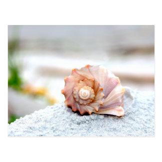 Seashell Postkarte
