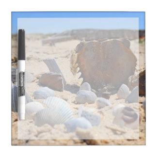 Seashells auf dem Strand durch Shirley Taylor Memoboard