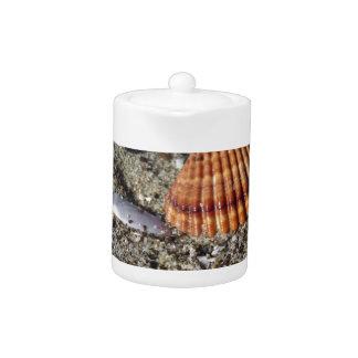 Seashells auf Sand Sommer setzen Draufsicht des