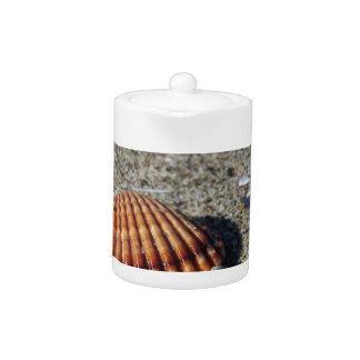 Seashells auf Sand. Sommerstrandhintergrund