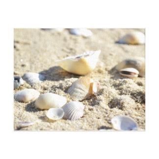 Seashells Leinwanddruck