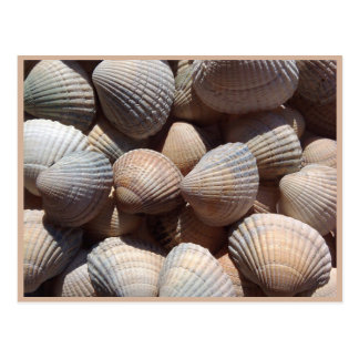 Seashells Postkarte