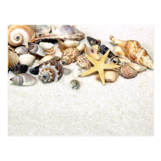 Seashells-Postkarte Postkarte