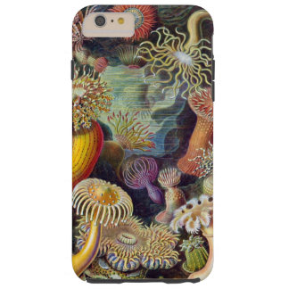 Seeanemonen Haeckel Illustration Tough iPhone 6 Plus Hülle