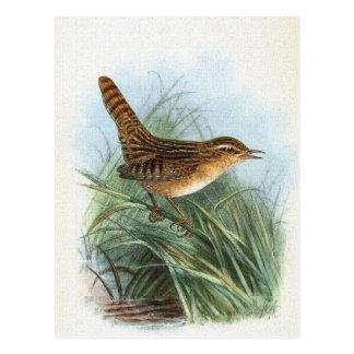 Segge-Zaunkönig-Vintage Vogel-Illustration Postkarte