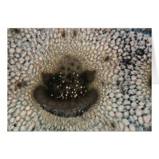 Sellerie unter dem Mikroskop Grußkarte