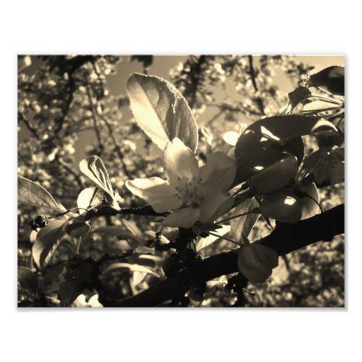 Sepia-Blüte Kunstphotos