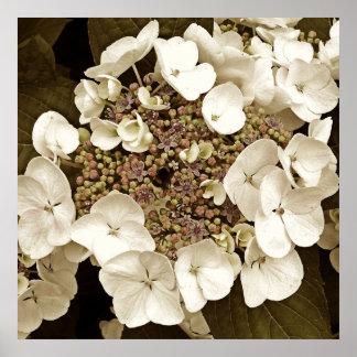 Sepia-Ton weißes Lacecap Hydrangea-Blüten-Plakat Poster