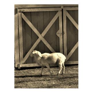 Sepia-Ton-Ziegen-und Scheunen-Türen Postkarte