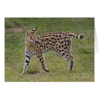 Serval-wilde afrikanische Katze Karte