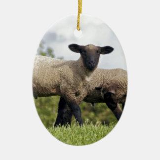 sheep keramik ornament