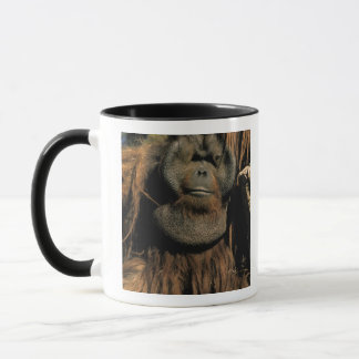 Sichernder Orang-Utan oder Pongo pygmaeus. Tasse