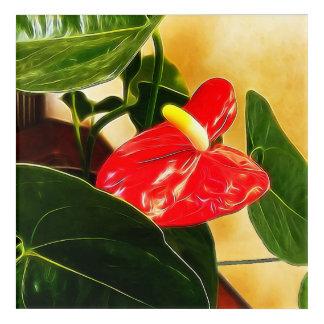 Single-rote Blütenschweif-Blume Acryldruck