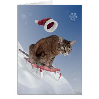 Sledding Katzen-Weihnachtskarte Karte