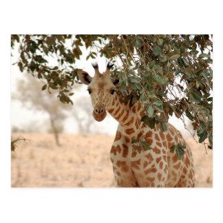 Snoopy Giraffe Postkarte