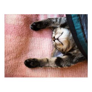 Snoozing Kätzchen Postkarte