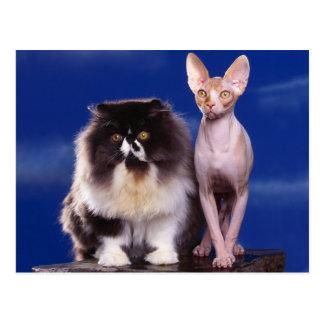So unterschiedlich wie eine Katze kann sein Postkarte
