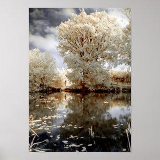 Sommer-weißer Baum-Nature See romantisch Poster
