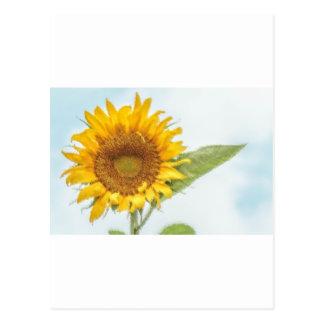 Sonnenblume-Kräuselung Postkarte
