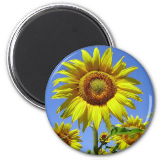 Sonnenblume Runder Magnet 5,1 Cm
