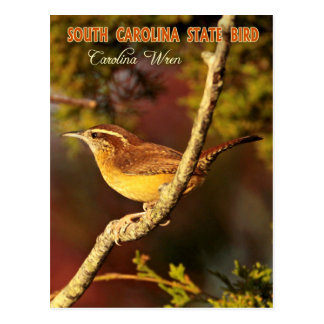 South- CarolinaStaats-Vogel: Carolina-Zaunkönig Postkarte