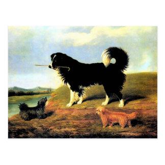 Spaniel und zwei Norfolk-Terrier Postkarte
