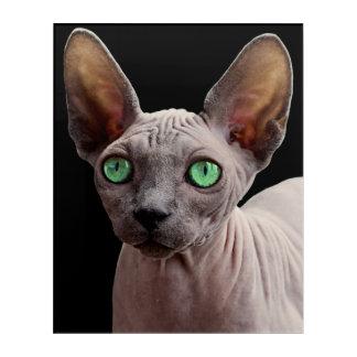 Sphynx mit grünen Augen Acryl Wandkunst