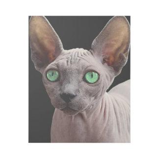Sphynx mit grünen Augen Galerieleinwand