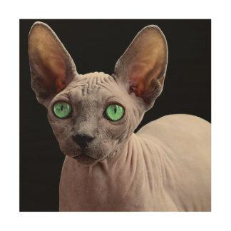 Sphynx mit grünen Augen Holzdruck
