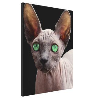 Sphynx mit grünen Augen Leinwanddruck