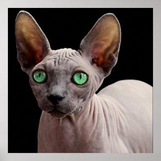 Sphynx mit grünen Augen Poster