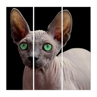 Sphynx mit grünen Augen Triptychon