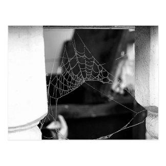 Spinnen-Netz-Postkarte Postkarte