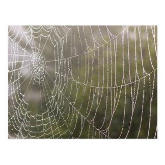 Spinnen-Spinnennetz Postkarte