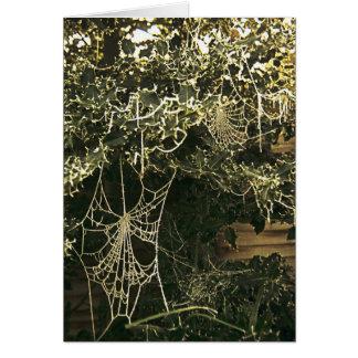 Spinnennetz auf einer Stechpalme Karte