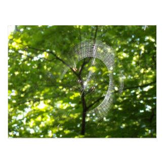 Spinnennetz Postkarte