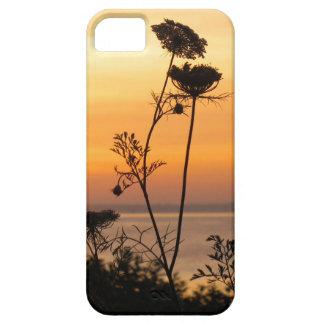 Spitze der Königin-Anne am Sonnenuntergang - Schutzhülle Fürs iPhone 5