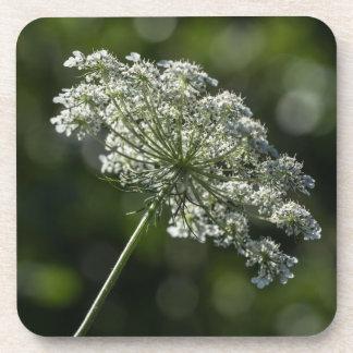 Spitze-weiße Wildblume-Untersetzer der Untersetzer