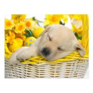 Springtime snooze postkarte