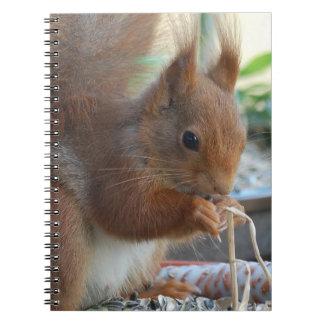Squirrel ~ Écureuil ~ Eichhörnchen  ~ by GLINEUR Notizbücher