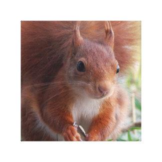 Squirrel Eichhörnchen - Foto Jean-Louis Glineur Galerie Falt Leinwand