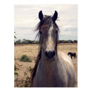 Star_The_Horse, _ Postkarte
