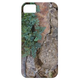Stein mit Planze iPhone 5 Etui