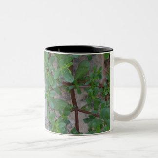 Stein und Pflanzen Zweifarbige Tasse