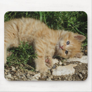 Stillstehendes Tabby-Baby Mousepad