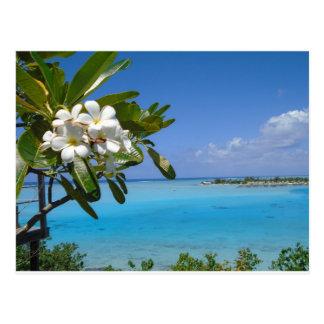 Strand-Hochzeits-Ozean-Tahiti-Blumen Postkarten