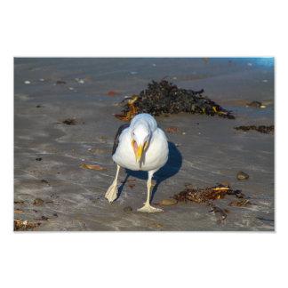 Strand-Seemöwe Photodruck